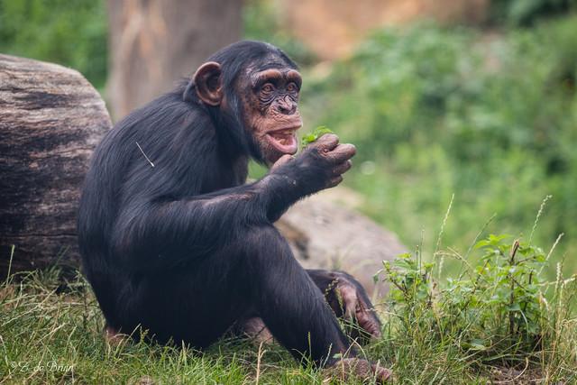 ТОП-10 самых умных животных на Земле
