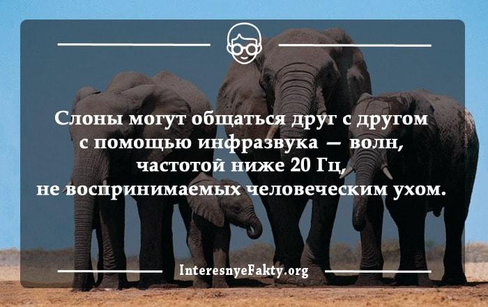Interesnyie-faktyi-o-slonah-1