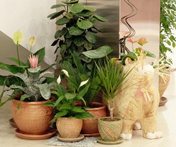 Растения для офиса